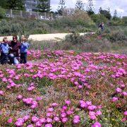 Andalusien Ferien Blumenwiese